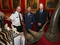 Ending illegal wildlife trade with British Royalty