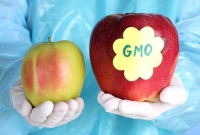 New GMO labeling bill introduced by Maryland legislator
