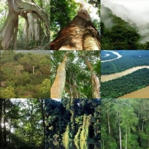save the mabira forest in uganda