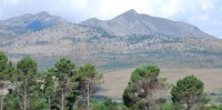 """No"" to forestry in fynbos areas"