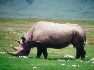 Top honours for significant rhino protection