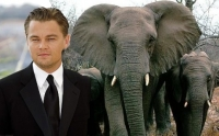 Save the elephants, petitions Leo