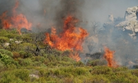 Fynbos fire project gets underway