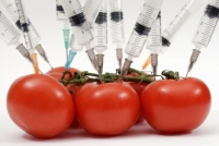GM food is a commercial flop in Europe