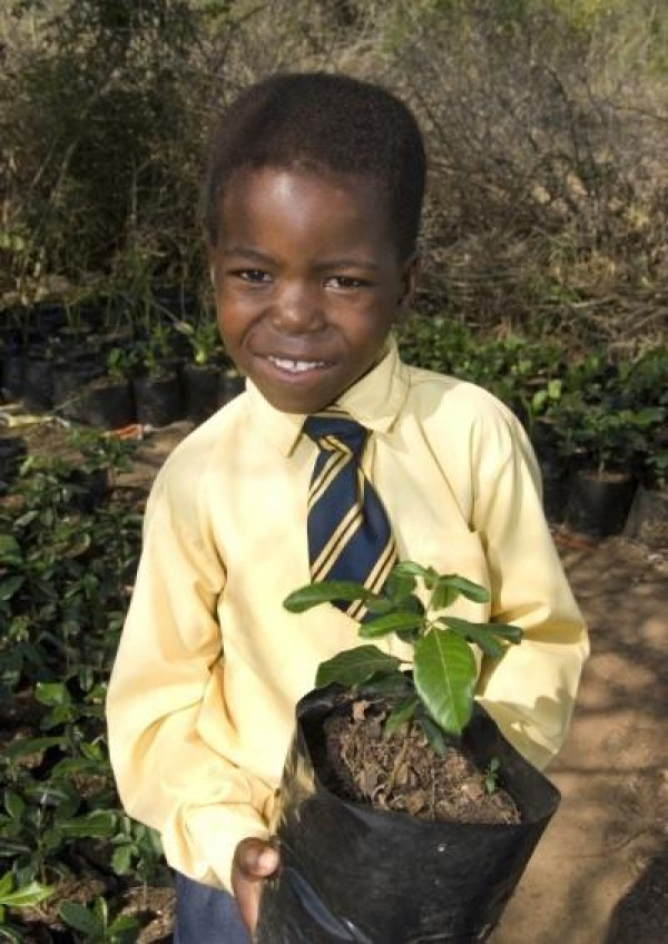 tree-preneurs-feed-families--green-the-environment