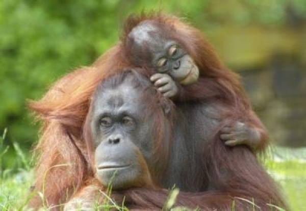 first-to-support-sustainable-palm-oil