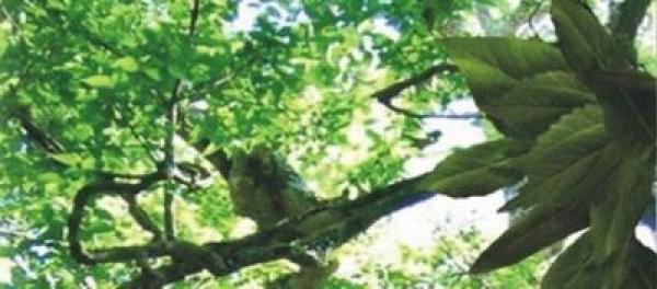 trees-of-light-meditations