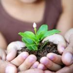 plant-a-seed-grow-an-idea