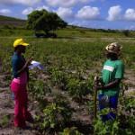 biofuels_europe_landgrab_africa_green