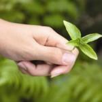 carbon_neutral_liftoff_green_leaf_hand