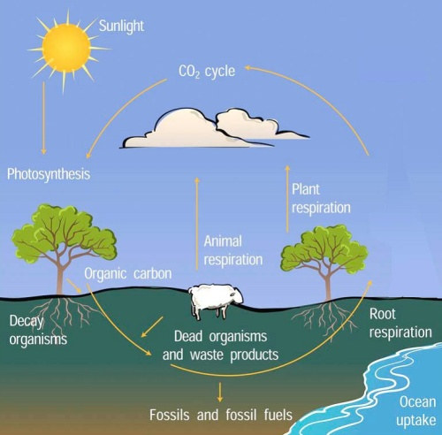 climate change_carbon_management_diagram2