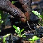 pick-n-pay-brings-trees-to-alexandra