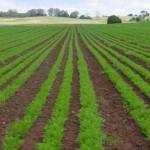 organic-policy-to-help-sadec-countries