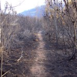 easter_sunday_helderberg_nature_reserve_fire7