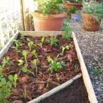 eco_harvest_spring_planting_adams_green_1