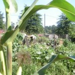 permaculture-feeds-the-planet