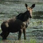forest_haliburton_trees_wildlife_lumber_canada3