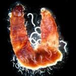 jeanne_worms_moths_genetics