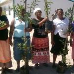 just_trees_ladies_green_news