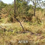 livestock_farming-achm-after