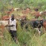 livestock_farming-achm-allan_savory1