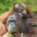 palm_oil_woolworths_baboons_sustainable