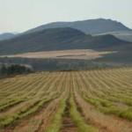 rooibos-farm
