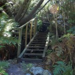 silvermine_forest_trail_350