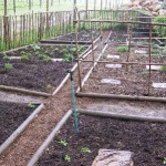 stoep_harvest_sam_adams_organic_garden_3