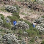 trees_for_tourism_forest_fynbos_planting_eco1