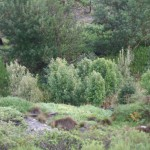 trees_for_tourism_forest_fynbos_planting_eco3