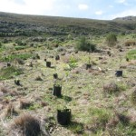 trees_for_tourism_forest_fynbos_planting_eco6