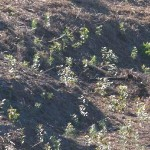 trees_for_tourism_forest_fynbos_planting_eco7b