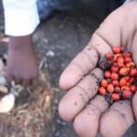 wildlands_project_green_news_seeds