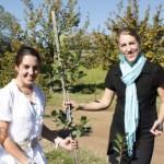 wine_planting4