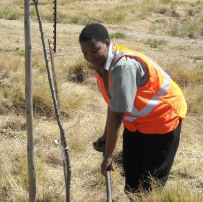 woolworths_trees_planted_arbour_week_eco2