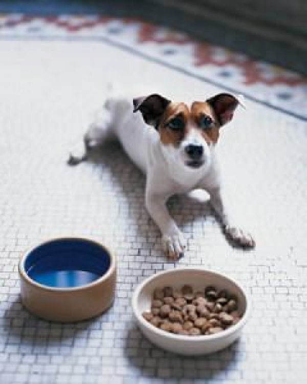 home-made-petfood-naturally-best
