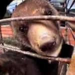 illegal-wildlife-trade-killing-biodiversity