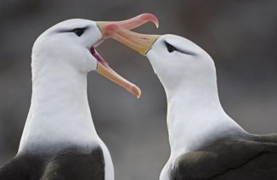 albatross endangered birds green