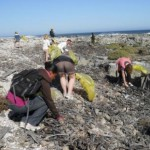 robben-island-beaches-enjoy-green-sweep