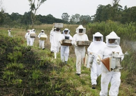 beekeeper getting started eco protect honey4
