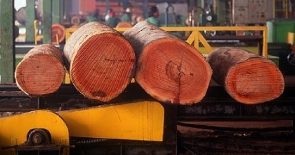thirsty-trees-threaten-water-resources