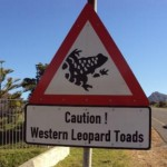 watch-out-for-the-toad-moon