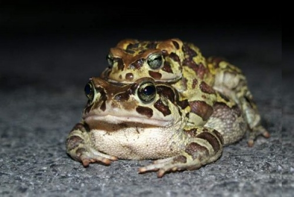 through-the-eyes-of-a-toad