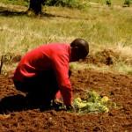 food_security_land_school_east_cape_seed_8