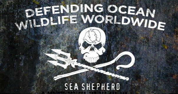 kunneke whale wars sea shepherd eco1