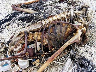 ocean_plastic_dead_bird