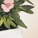 polystyrene_flowers_green_news