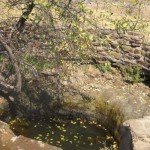sebope_primary_world_water_monitor_well_3