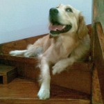 service_dog_stairs